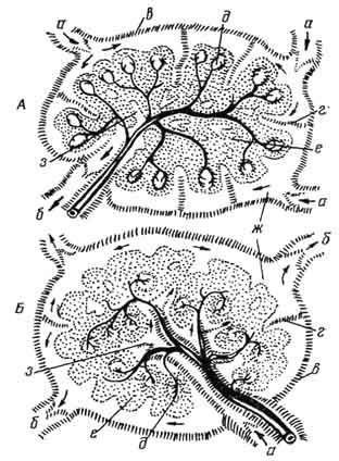 Схема строения лимфатического