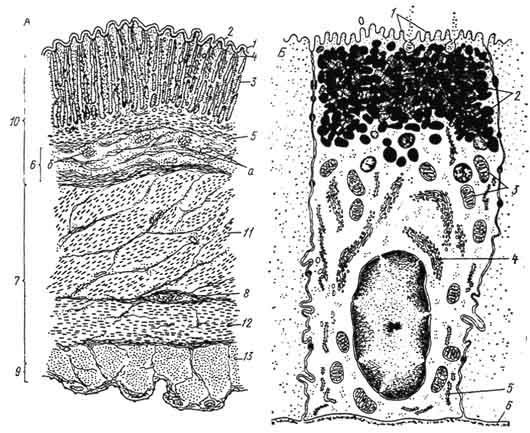 А - схема микроскопического